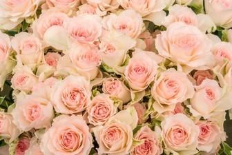 大阪の結婚相談所ならヒューマンハート 26歳女性がご入会