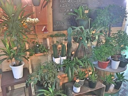 観葉植物均一セール