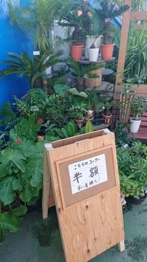 夏らしい植物50パーセントオフ