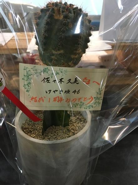 サボテン / 鉢花
