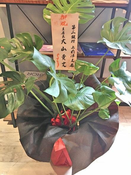 モンステラ / 観葉植物