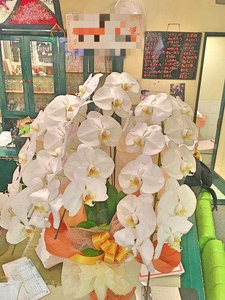 コチョウラン / 鉢花