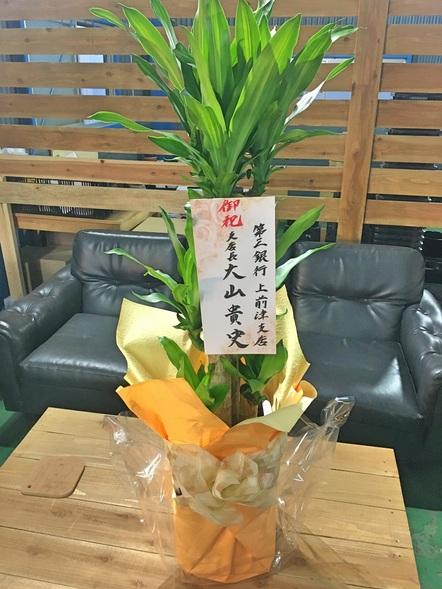 ドラセナ マッサンゲアナ / 観葉植物