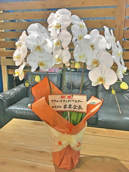 胡蝶蘭 / 鉢花