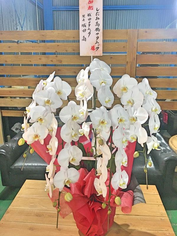 胡蝶蘭5本立ち / 鉢花