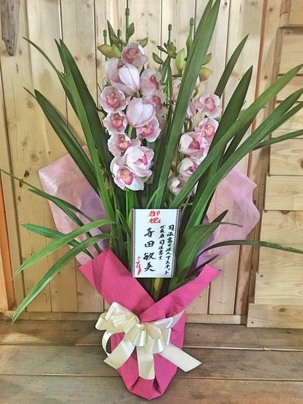 シンピジューム / 鉢花